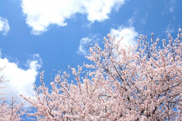一番の塗装シーズンは春!