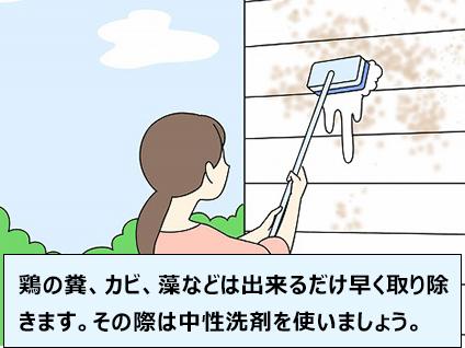 鶏の糞、カビ、藻などは出来るだけ早く取り除きます。その際は中性洗剤を使いましょう。